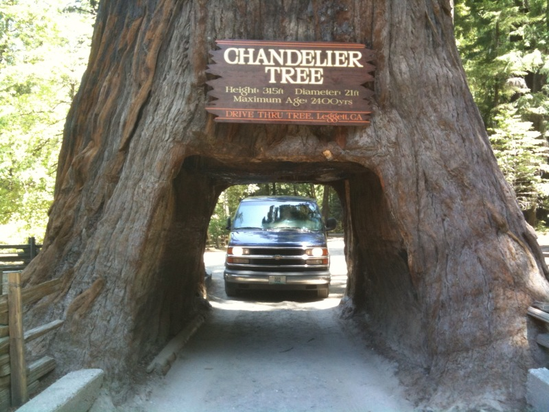 The chandelier tree aloadofball Images